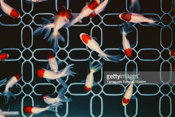 High Angle View Of Fish Shaped Objects