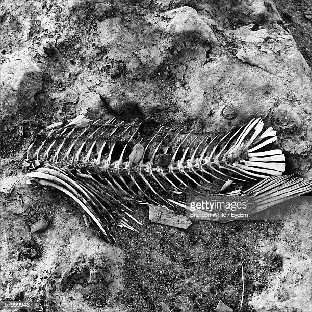 High Angle View Of Fish Skeleton On Beach