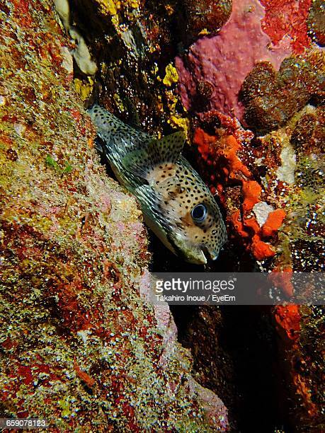high angle view of fish swimming amidst rocks in sea - inoue stock photos and pictures