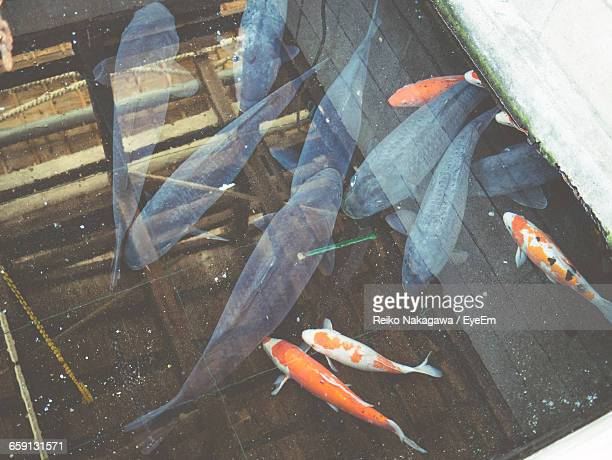 High Angle View Of Fish Swimming In Tank