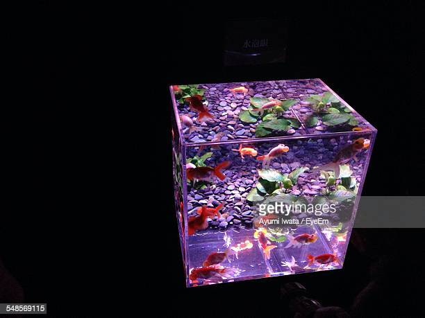 High Angle View Of Fish Tank In Darkroom
