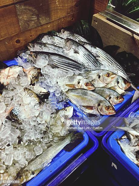 High Angle View Of Fish With Ice In Crate At Market