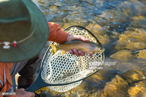 High angle view of fisherman taking freshly caught trout out of fishing net.