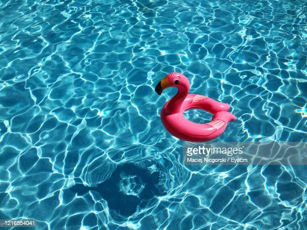 high angle view of flamingo toy floating on swimming pool - inflatable stock pictures, royalty-free photos & images