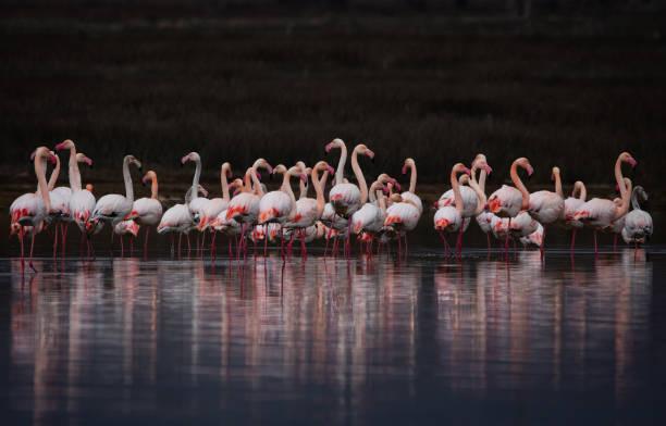 High angle view of flamingos on lake