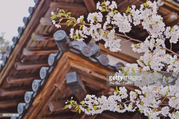 high angle view of flowering plant on wood - hirosaki stock pictures, royalty-free photos & images
