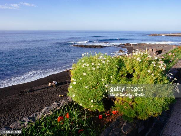 high angle view of flowering plants by sea against sky - marek stefunko stock photos and pictures