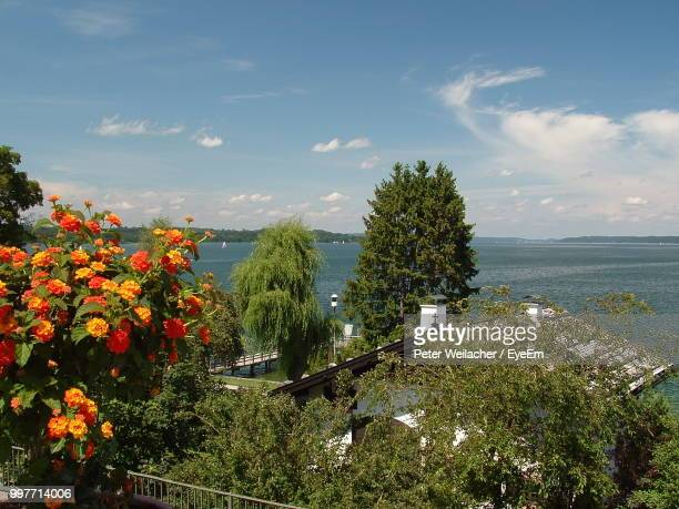 high angle view of flowering plants by sea against sky - weilacher stock-fotos und bilder