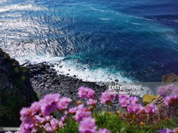 high angle view of flowering plants by sea - leoma burke fotografías e imágenes de stock