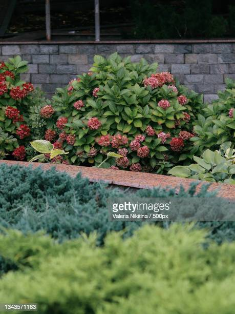 high angle view of flowering plants in garden,russia - nikitina stock pictures, royalty-free photos & images