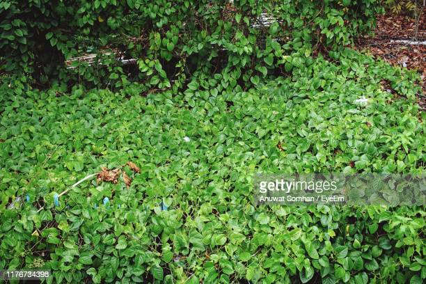 high angle view of flowering plants on land - anuwat somhan stock photos and pictures
