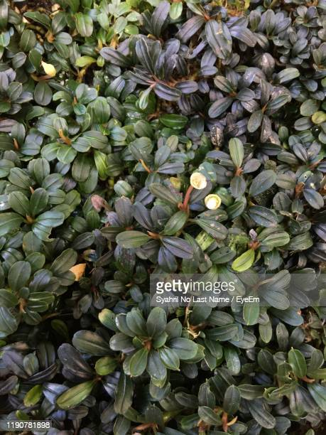 high angle view of flowering plants - last stock pictures, royalty-free photos & images
