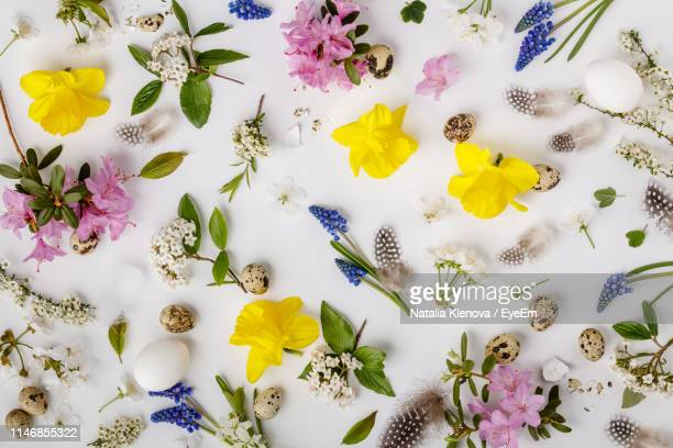 high angle view of flowers and eggs over white background - easter flowers stock pictures, royalty-free photos & images