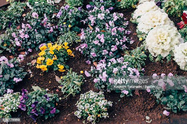 high angle view of flowers blooming in garden - koukichi koukichi stock photos and pictures