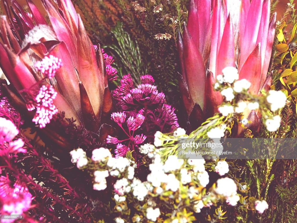 High Angle View Of Flowers Blooming Outdoors : Foto de stock