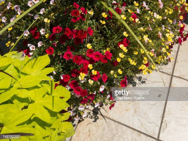 High Angle View Of Flowers Blooming Outdoors