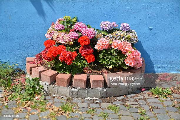 High Angle View Of Flowers Growing Against Wall