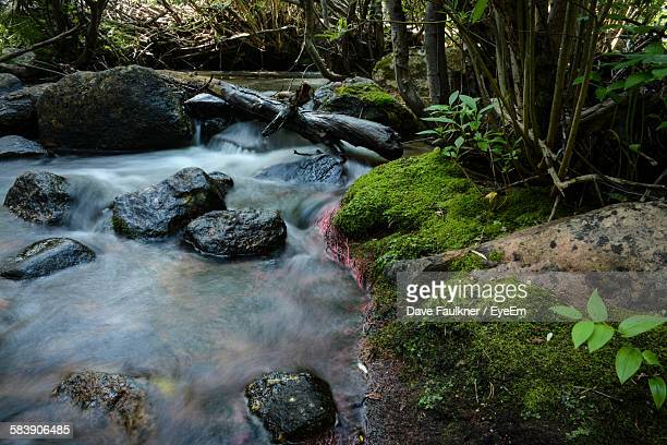 high angle view of flowing river in forest - dave faulkner eye em stock pictures, royalty-free photos & images