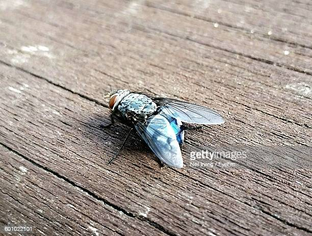 High Angle View Of Fly On Wooden Plank