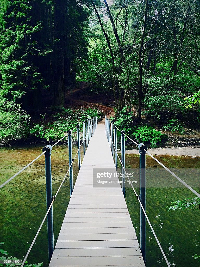 High Angle View Of Footbridge Over Lake Leading Towards Forest : Stock Photo