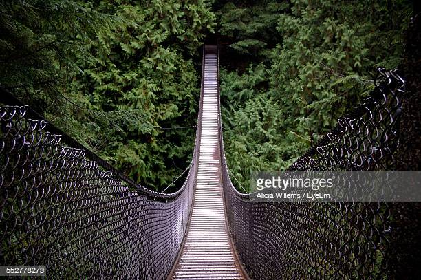 High Angle View Of Footbridge Relaxing Towards Trees In Forest