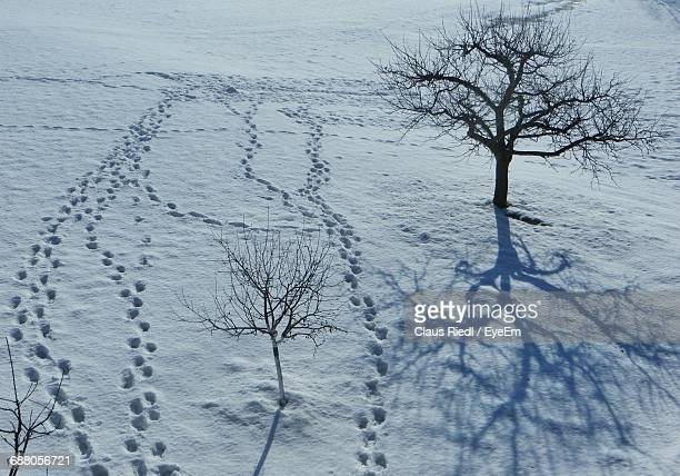High Angle View Of Footprints And Bare Trees On Snowfield