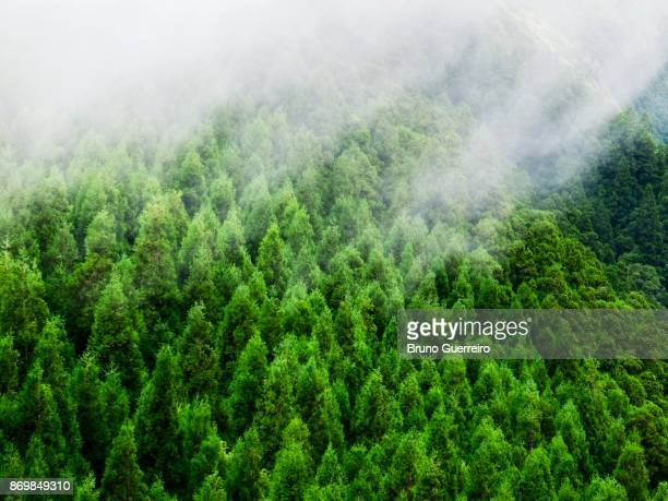 High angle view of forest treetop against clouds