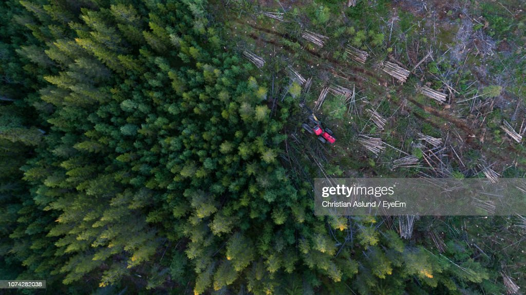 High Angle View Of Forestry Machinery Amidst Trees In Forest : Bildbanksbilder
