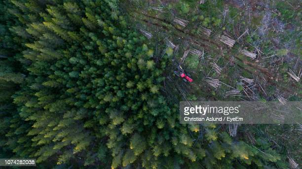 high angle view of forestry machinery amidst trees in forest - deforestation stock pictures, royalty-free photos & images
