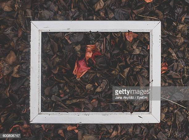 High Angle View Of Frame On Autumn Leaves On Field