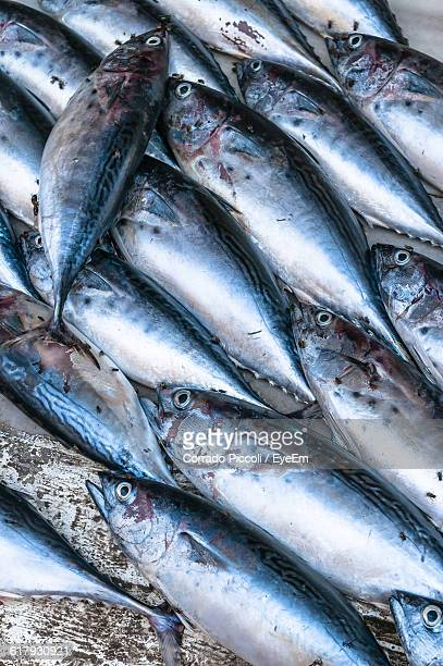 high angle view of fresh fish for sale at market - corrado pesci foto e immagini stock