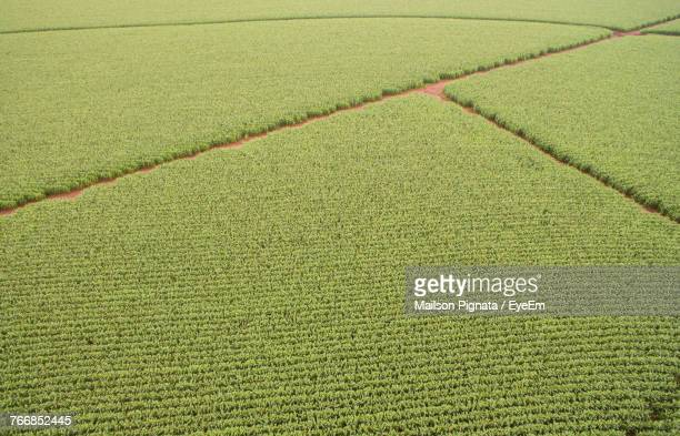 High Angle View Of Fresh Green Field