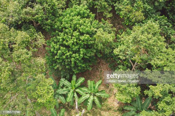high angle view of fresh green plants in forest - bortes cristian stock-fotos und bilder