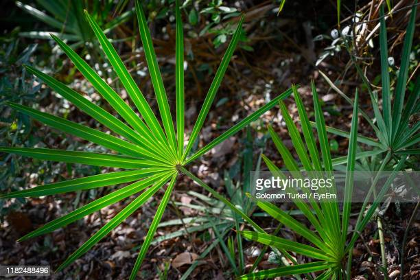 high angle view of fresh green plants on field - solomon turkel stock pictures, royalty-free photos & images