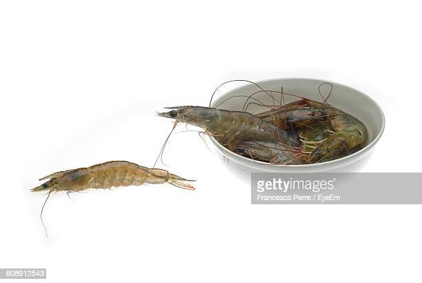 High Angle View Of Fresh Shrimps Against White Background
