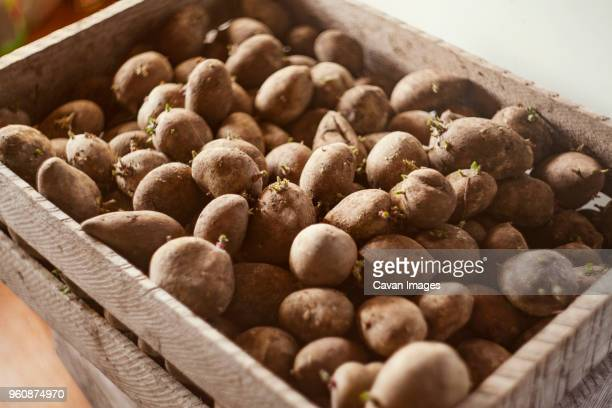 High angle view of freshly harvested potatoes in crate
