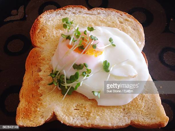 High Angle View Of Fried Egg Garnished With Sprouts On Toasted Bread