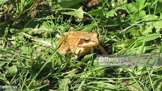 High Angle View Of Frog On Green Field
