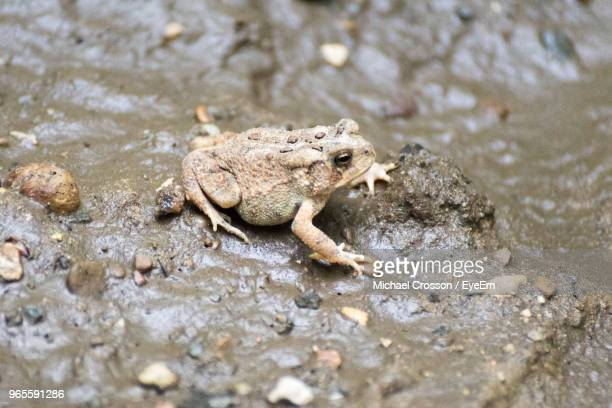 high angle view of frog on rock - michael stock photos and pictures