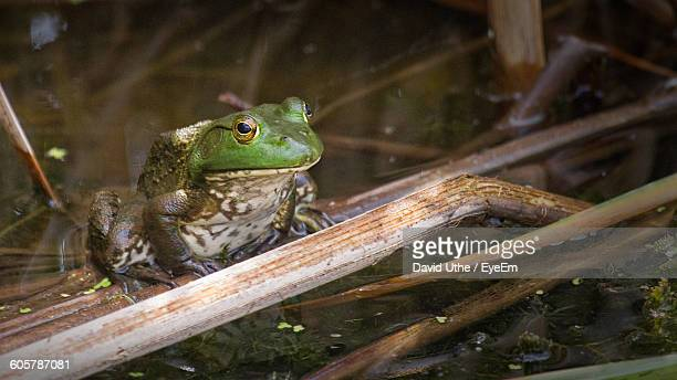 High Angle View Of Frog On Twig In Swamp