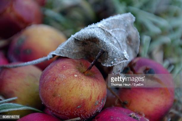 High Angle View Of Frozen Leaf And Apples On Field