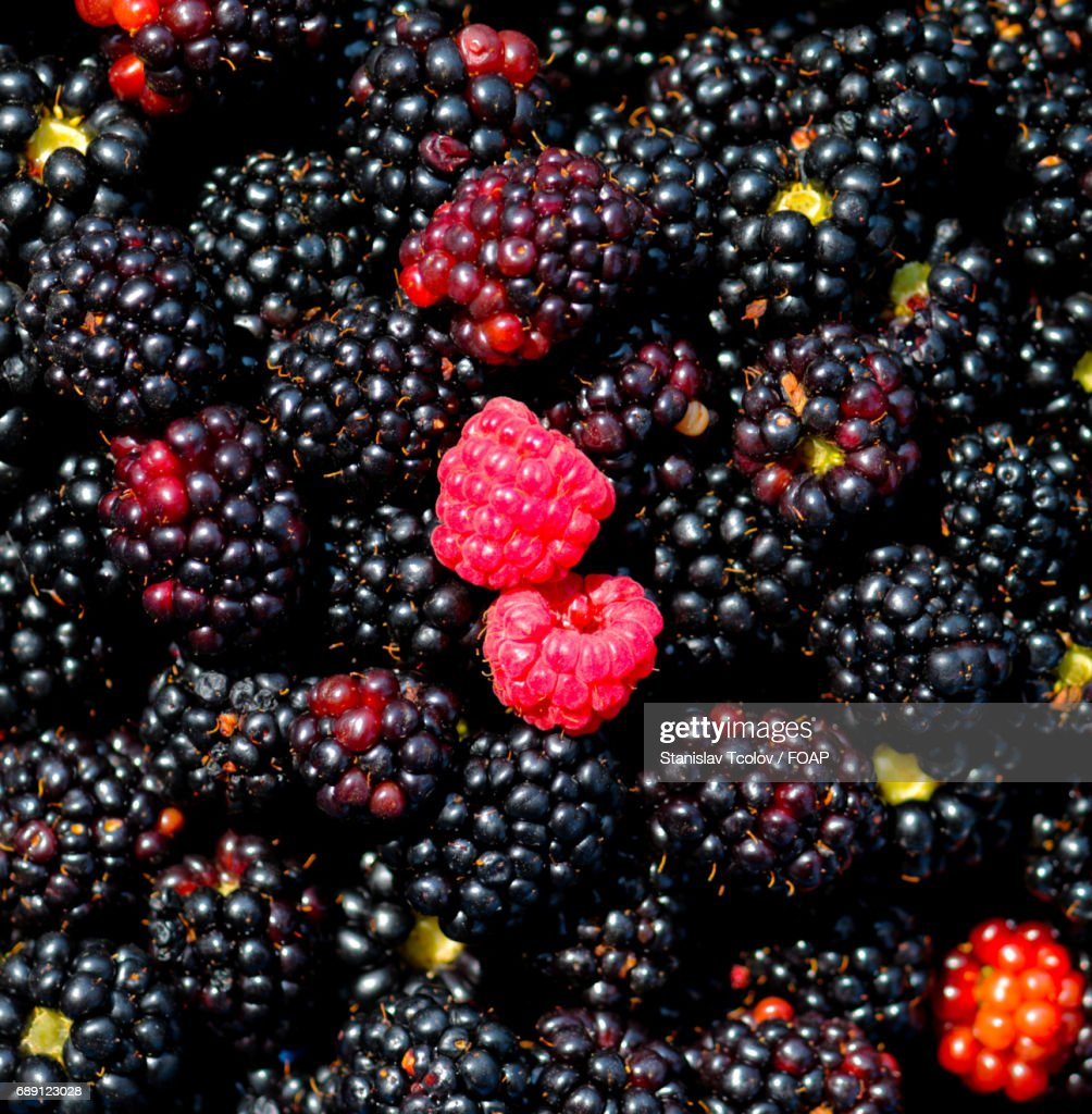 High angle view of fruits : Stock Photo