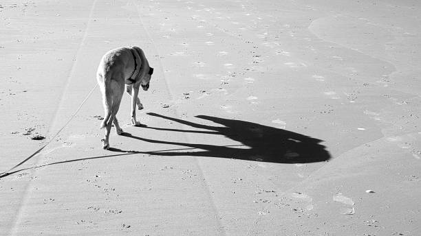 High Angle View Of Galgo On Beach