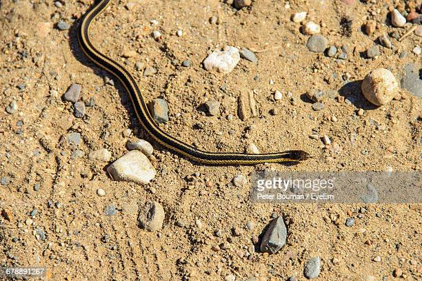 High Angle View Of Garter Snake On Field