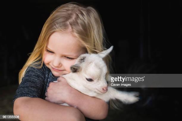 High angle view of girl embracing kid goat