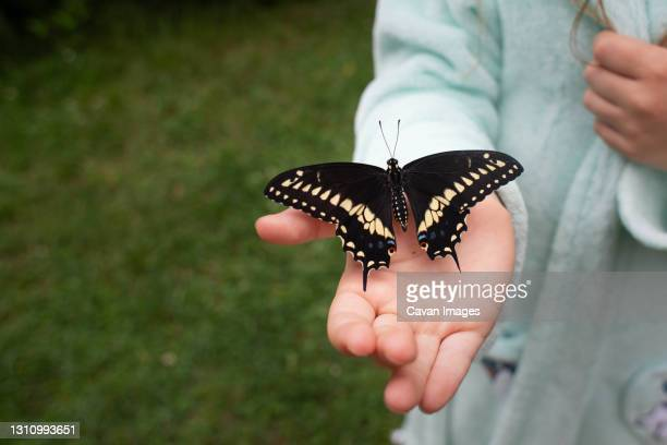 high angle view of girl holding butterfly while standing in her yard - swallowtail butterfly stock pictures, royalty-free photos & images