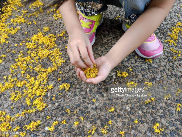 High Angle View Of Girl Holding Yellow Flowers