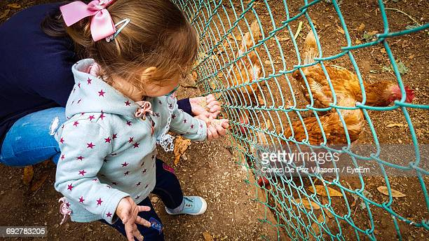 High Angle View Of Girl With Mother Feeding Chickens In Poultry Farm
