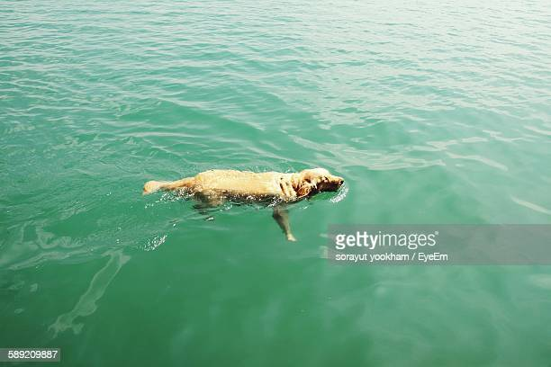 High Angle View Of God Swimming In Lake