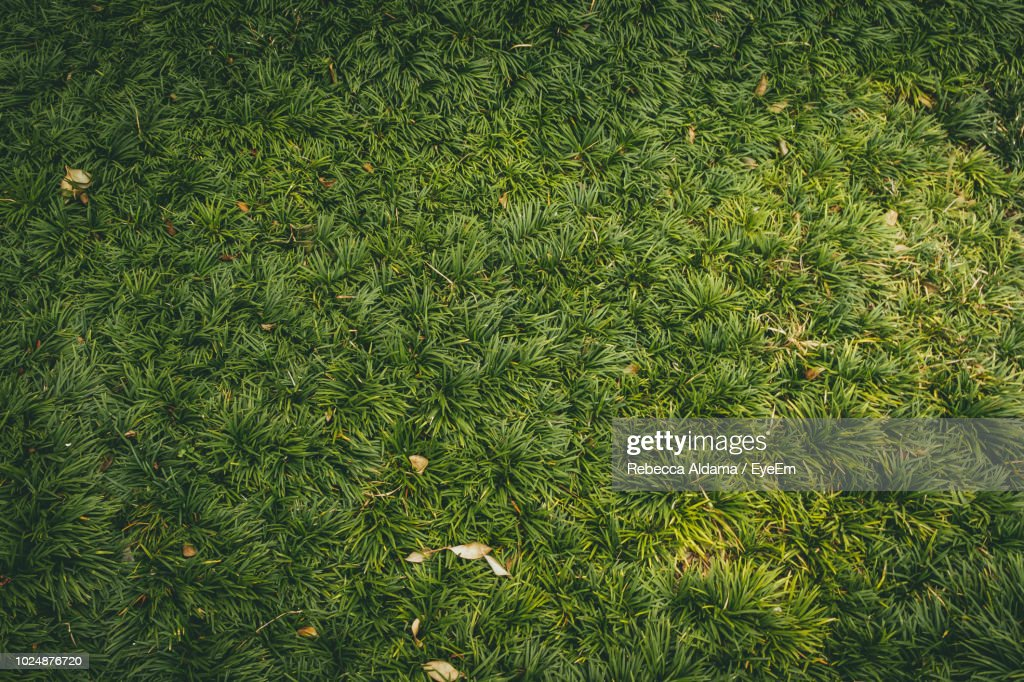 High Angle View Of Grass Growing On Field : Stock Photo